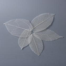 5 stk getrocknete Blätter Weiß ca 7.2c..