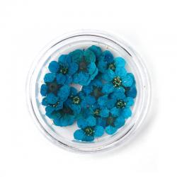 Getrocknete Blumen Azurblau 8mm x 8mm ..